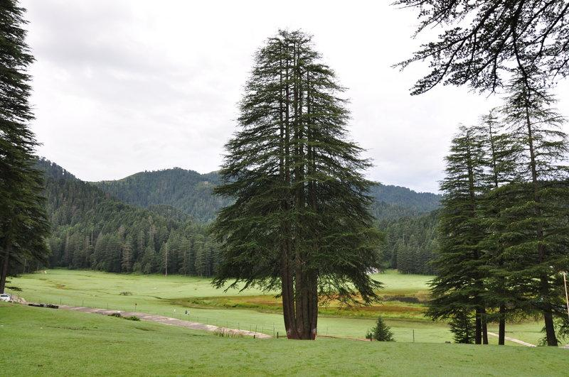 Khajjiar-Panch Pandav Tree-1